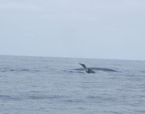 whales Los Coronados